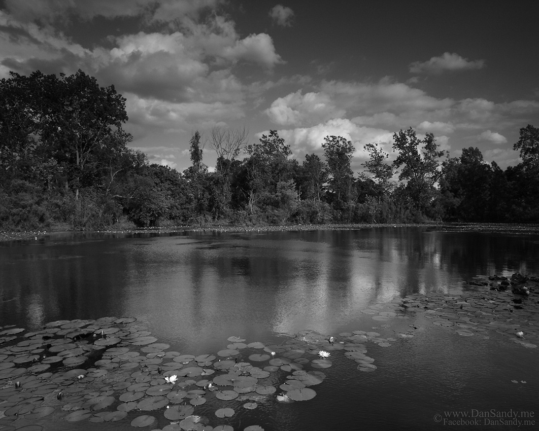 "2012-03-09 - ""Lilly Pond"""