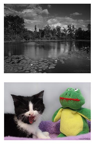 """2012-03-09 - """"Wha Wha Where is Fluffy"""""""