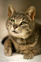 """2015-05-21 - YEC - """"Portrait of a shelter cat"""" - Did not place"""