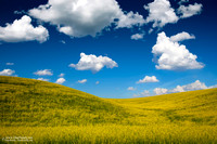 """2017-09-22 - Did Not Place - Pictorial Competition - """"Canola Field"""""""