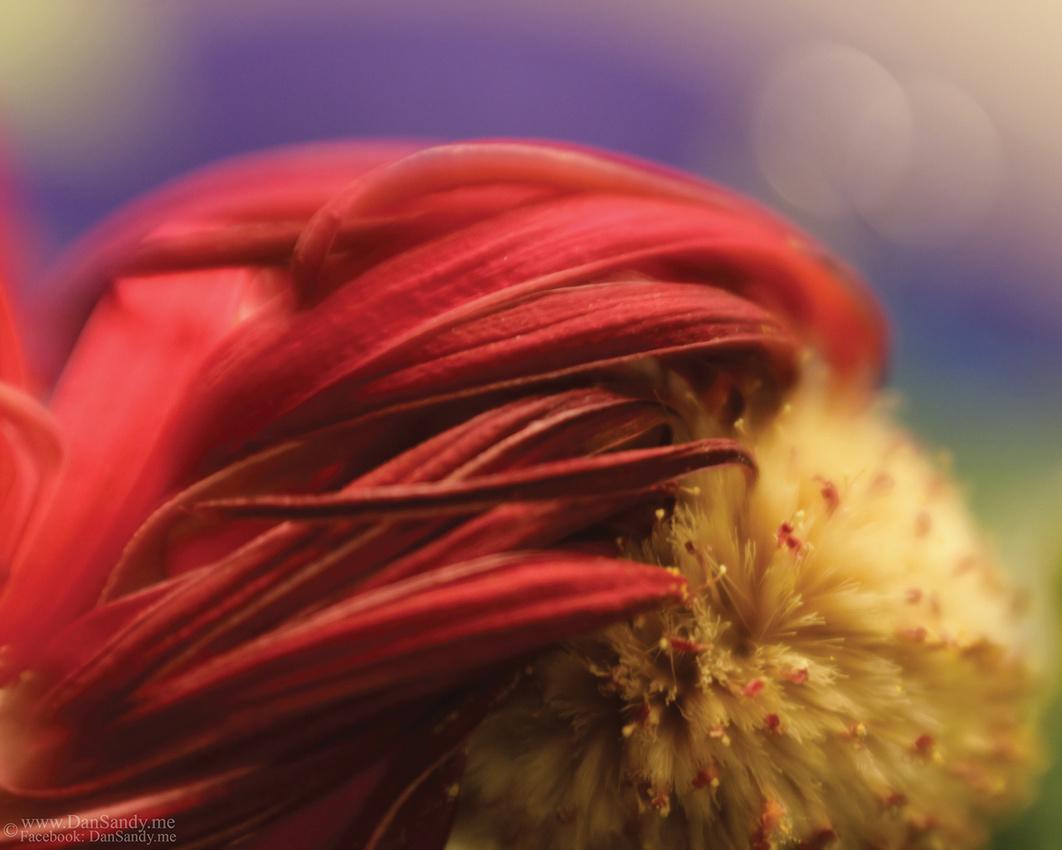 "2012-03-23 - ""The Fleeting Redhead"""