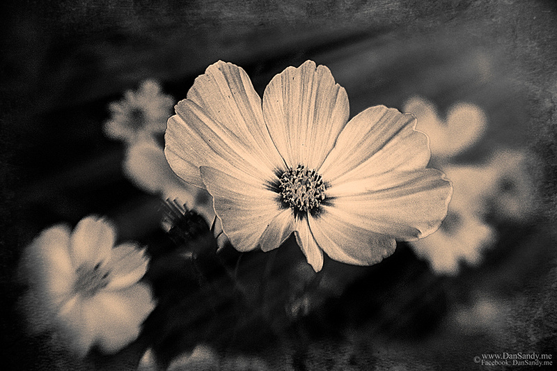 """2016-05-21 - Did not Place - Year end competition - B&W Category - """"Dark Flower"""""""