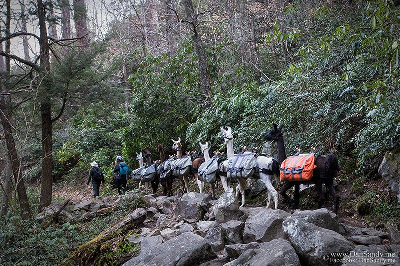 Llama train near Grotto Falls