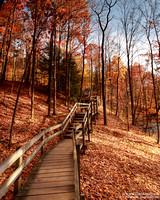 """2012-02-10 """"Autumn Stairs"""""""